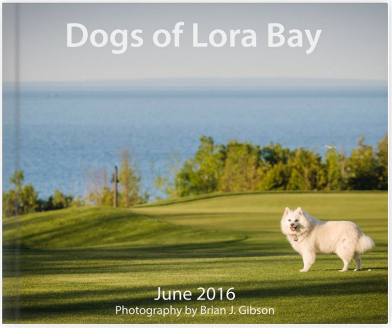 Dogs of Lora Bay
